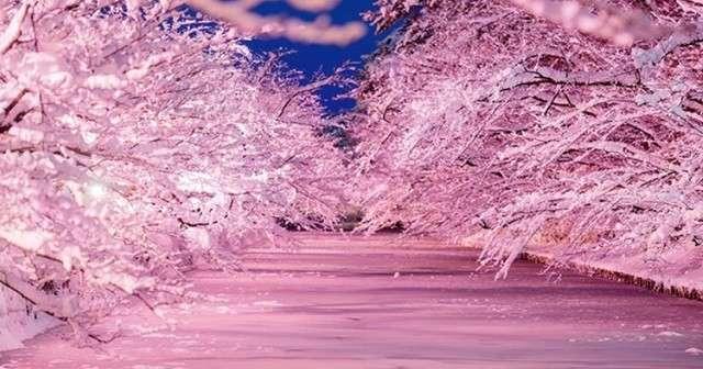 冬に桜なんて咲くわけがない?この写真を見れば時が止まることでしょう・・・ | Lenon