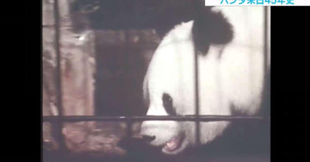 """国の""""イメージ大使""""から上野の""""シンボル""""へ、シャンシャン公開で振り返るパンダ来日45年史"""
