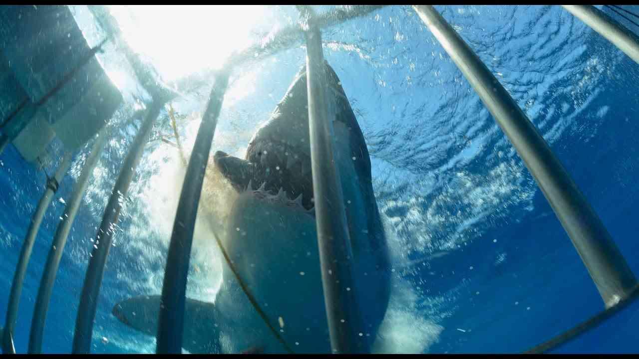 サメ被害映像(閲覧注意!) - YouTube