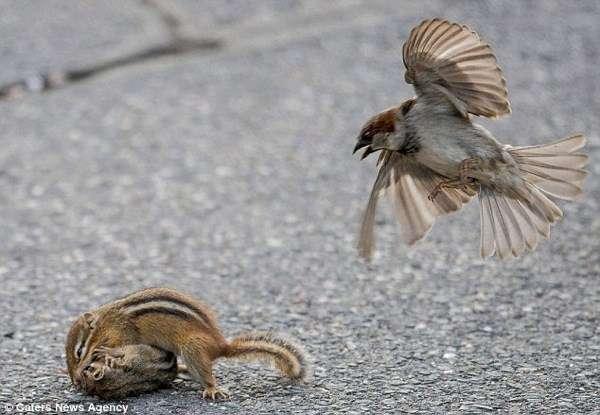 スズメが好きな人ー!