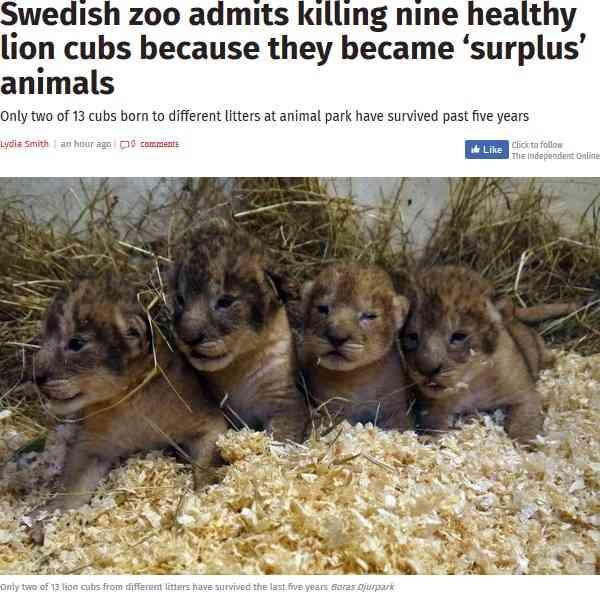 5年間で健康な子ライオン9頭を安楽死 スウェーデンの動物園の対応に物議