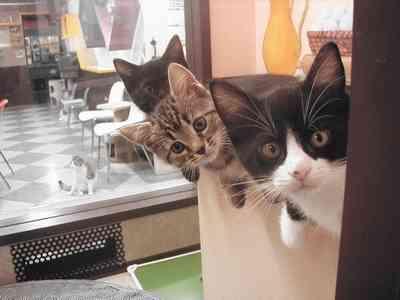 動物カフェに行ったことのある人、どうでしたか?