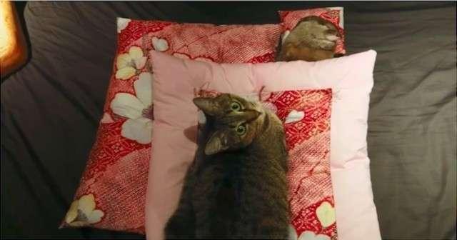 行儀よく布団で眠るカワウソを羨ましそうに見つめていた猫が近寄ってきて・・・ | Lenon
