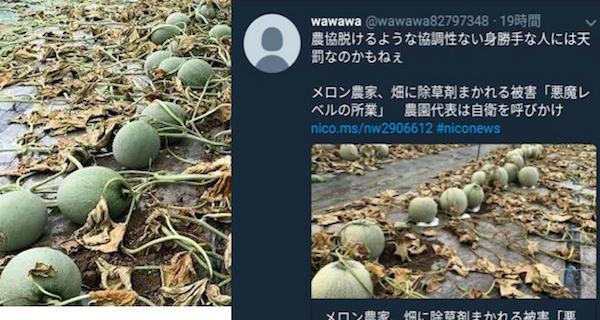 農協から脱退後、メロンに除草剤が撒かれた→犯人がSNSで批判? | じゅんじゅんトレンドメディア