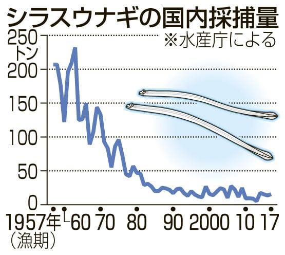 ウナギ、大不漁の恐れ 稚魚の漁獲量、前期の1%に低迷