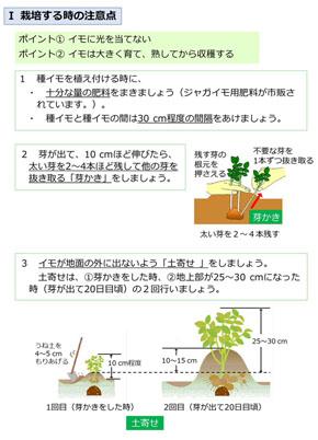 ジャガイモは光に当てないで…農水省が栽培や調理時の取り扱いについて注意喚起