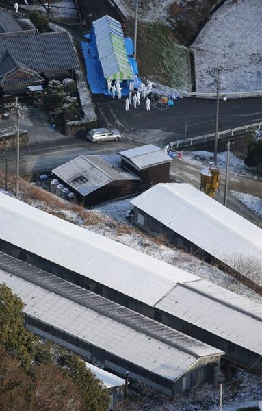 鳥インフルで殺処分続く 香川の養鶏場、約9万2千羽 - 産経WEST