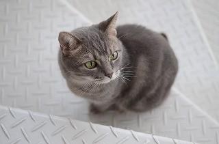 【コラム】結婚の条件は、愛猫を捨てることだった 第4回 猫って、人を変えるのだ - Peachy - ライブドアニュース