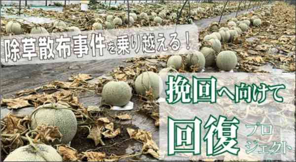 除草剤まかれメロン6600玉が全滅。経営の危機、農家はクラウドファンディングに再起をかけた