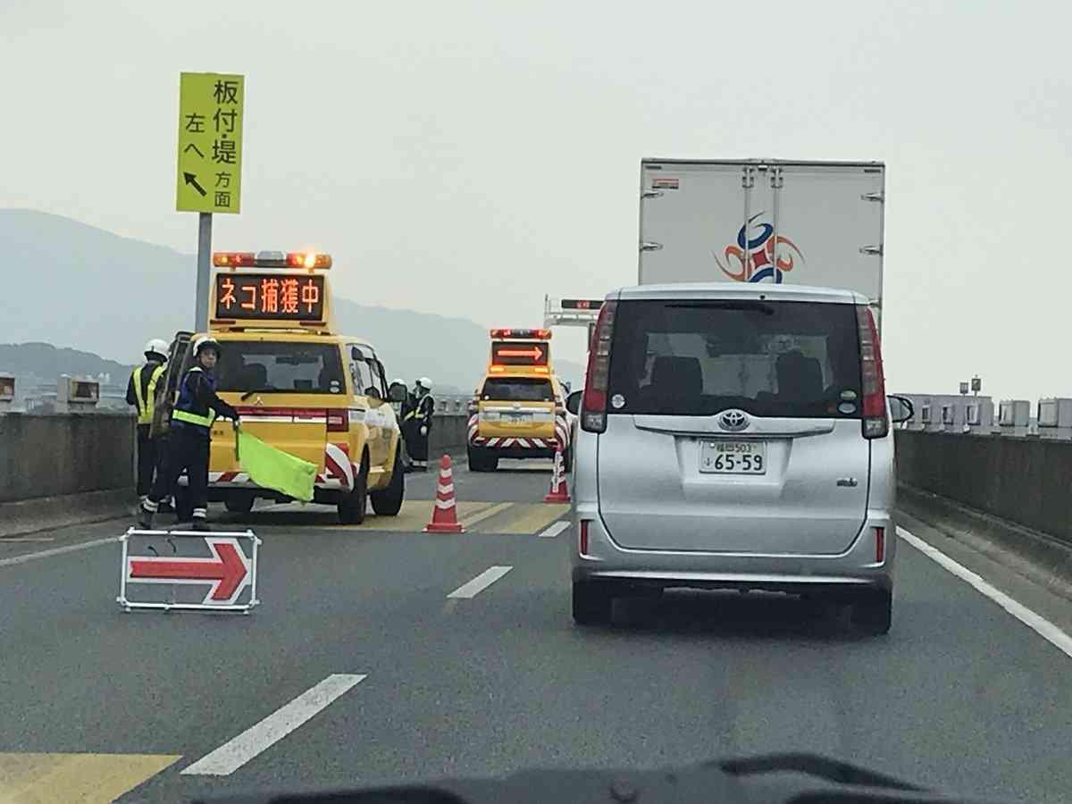 高速道路で「ネコ捕獲中」の表示。こんなの初めてみた。