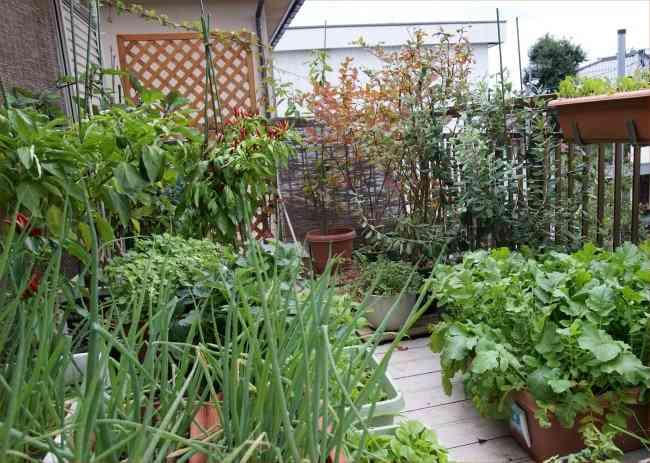 家庭菜園入門『家庭菜園キット』