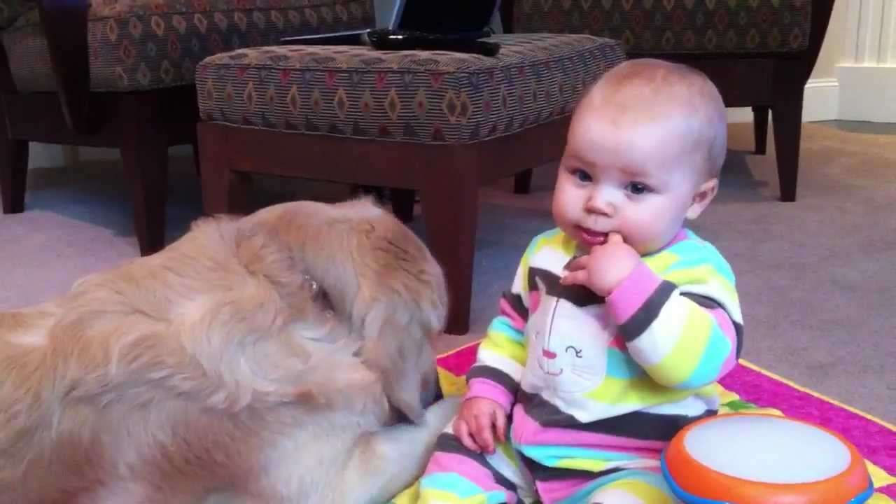 Baby Seeks Golden Retriever's Attention - YouTube