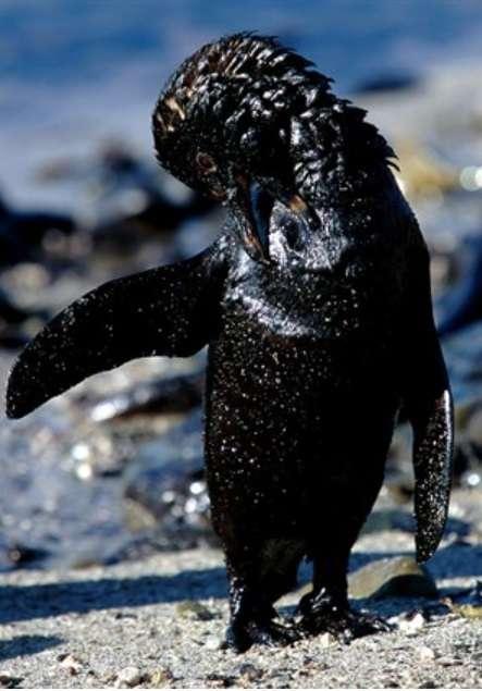 ●ペンギンの恩返し|占い師の一言ブログ
