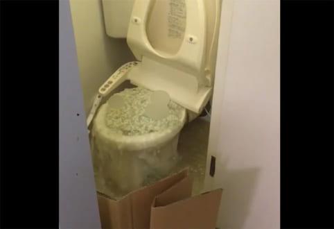 猫砂が原因と思しきトイレの惨劇にネット民悲鳴!猫砂は流さないで! | おたくま経済新聞