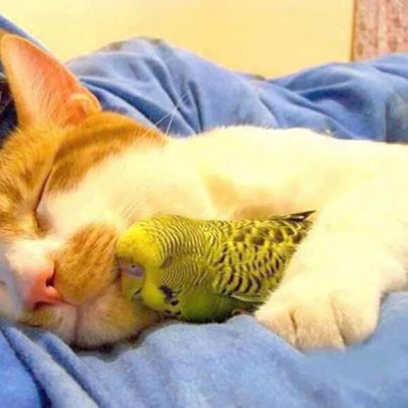 【画像】眠っている動物たち