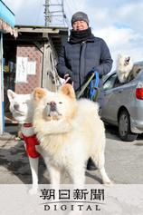 わさおは道路を見続けていた 飼い主が亡くなった後:朝日新聞デジタル