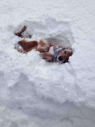 雪を見て喜ぶ動物が見たい