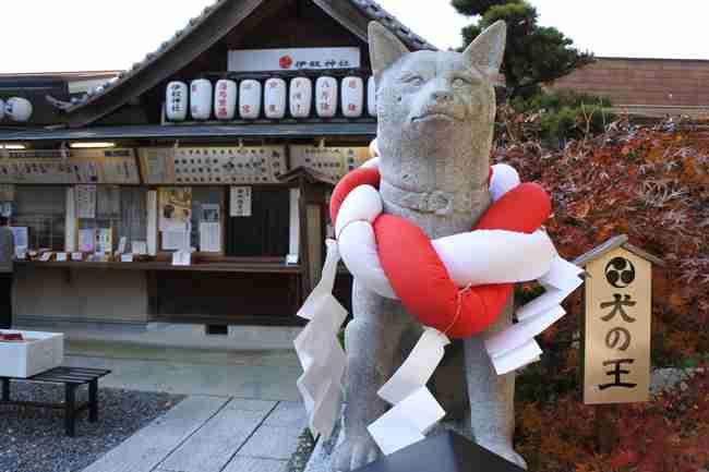 犬形おみくじがかわいい!初詣に最適な犬の健康祈願ができる名古屋「伊奴神社」 | PETomorrow(ペットゥモロー) ~明日も うちの子、元気~
