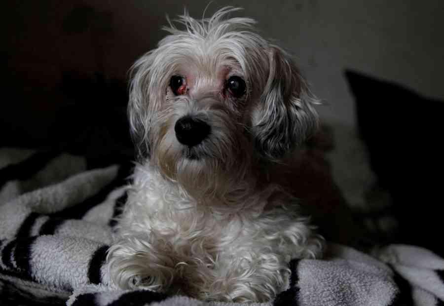 飼い主の遺体に数週間寄り添う、衰弱した犬を保護 ハンガリー (ロイター) - Yahoo!ニュース