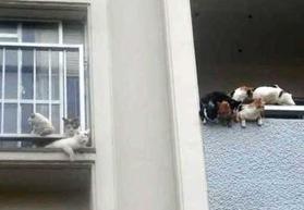 ネコ53匹、市営住宅に放置 「ふん尿で悪臭」強制退去