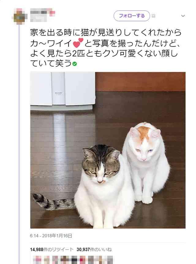 「お留守番させるなんて(怒)」?「姐さん行ってらっしゃいませ」? 外出する時に見送りに来た猫の表情がかわいくなくてかわいい   ガジェット通信 GetNews
