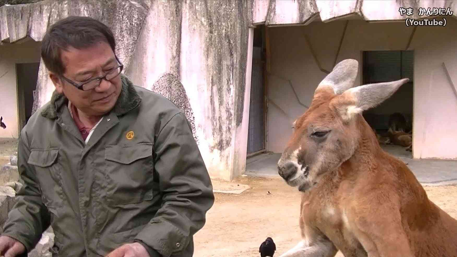カンガルーは家で飼えるらしい / 東山動物園 - YouTube