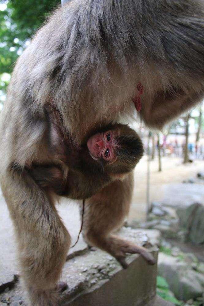 赤ちゃんザルに「シャーロット」命名も抗議で取り消しを検討