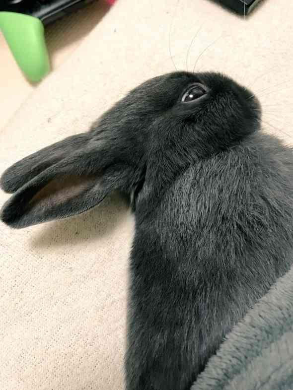 これ、見たことあるやつだ! 「だまし絵」みたいなウサギさん - ニュース - Jタウンネット 東京都