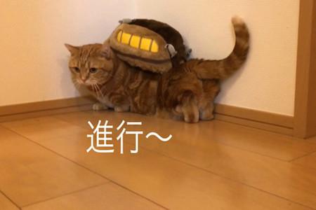 「出発進行にゃ」 ネコバスになった短足猫ちゃんがかわいい