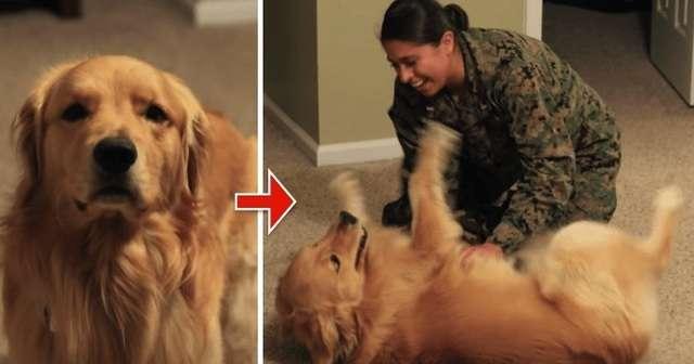 兵役でママが留守の間、元気がなかったゴールデンレトリバーが久しぶりに再会した時の行動に涙…! | 犬クラスタ