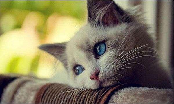 人の優しさに【涙】が出たこと、ありますか?
