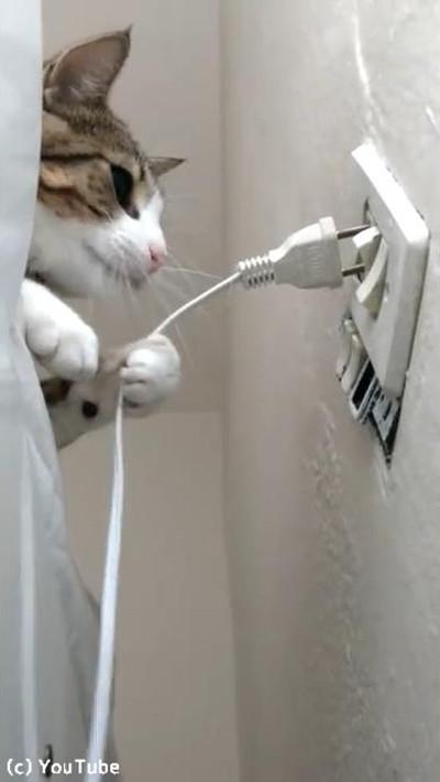 猫「プラグを抜きたい」飼い主「プラグを挿したい」…熱い攻防の結果は!?