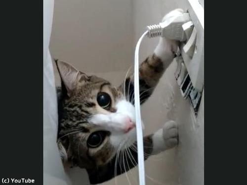 猫「プラグを抜きたい」飼い主「プラグを挿したい」…熱い攻防の結果は!?(動画):らばQ
