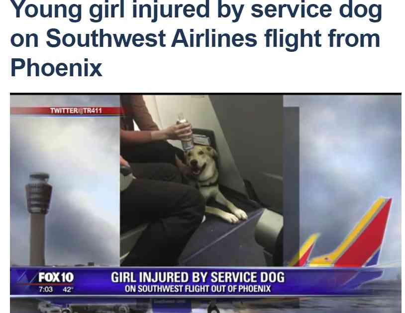 【海外発!Breaking News】セラピーアニマルの機内持ち込みで事故 犬が少女に噛みつく(米) | Techinsight(テックインサイト)|海外セレブ、国内エンタメのオンリーワンをお届けするニュースサイト