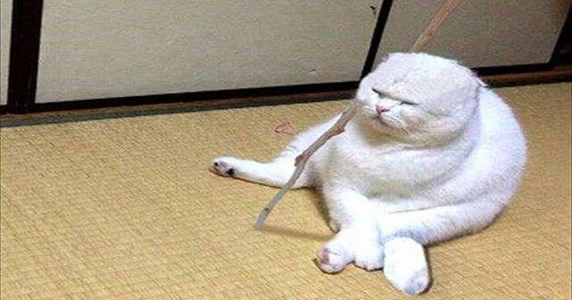 実写版「ドラゴンボールのカリン様」!?今にも仙豆をくれそうな猫ちゃん発見! | Lenon