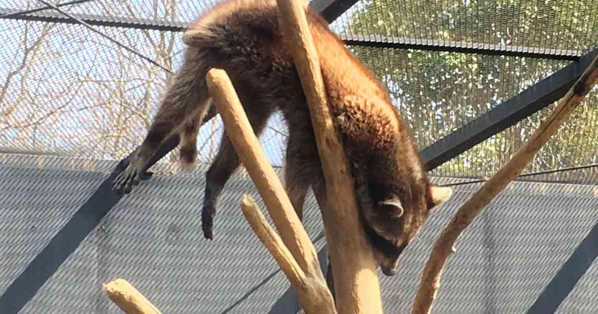 長崎バイオパーク公式さんの『 #飼育員の心臓に悪い動物の寝相コンテスト』が驚きの連続「もっと見たい!」 - Togetter