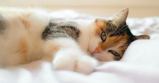 シニア猫からのずっと生き生きと暮らしていくための8つのお願い事に耳を傾けましょう! | Lenon