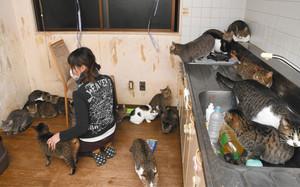 猫の多頭飼育崩壊、相次ぐ 中濃の20代女性、知識不足で一時70匹に