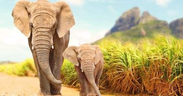 「どうしてゾウの鼻は長いの?」と聞いた少女に対するお母さんの答えに目からウロコ! | Lenon