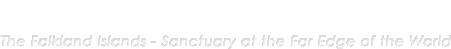 ペンギンの卵を食べる «  フォークランドの風 海外取材コーディネーター斎藤美香子 Official Website