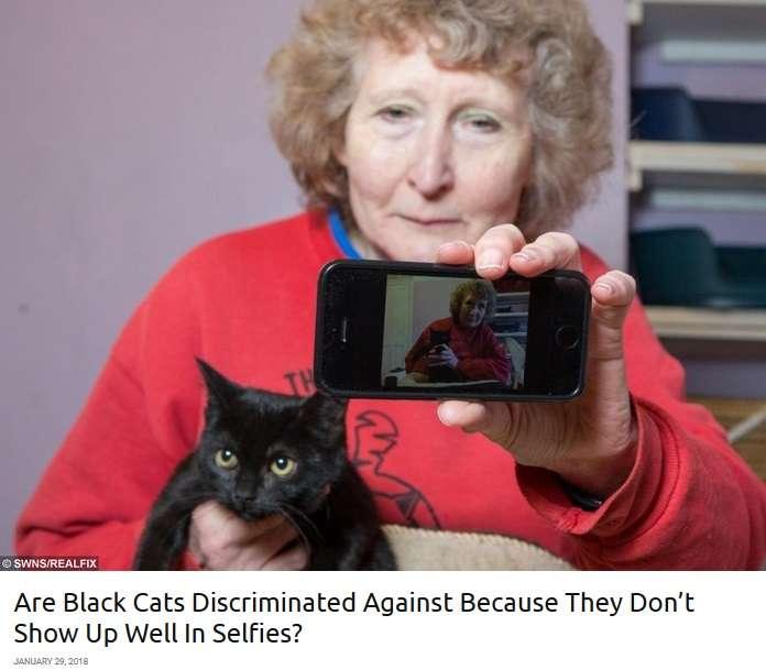 【海外発!Breaking News】「自撮りで映えない」 黒猫ばかりが捨てられる理由に保護センターも嘆く(英) | Techinsight(テックインサイト)|海外セレブ、国内エンタメのオンリーワンをお届けするニュースサイト