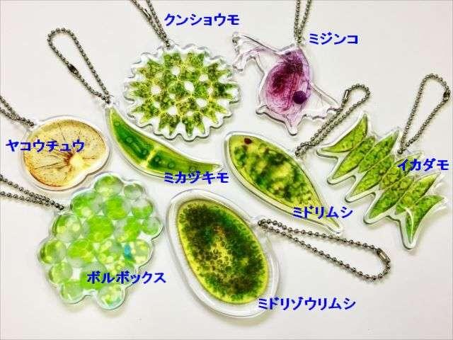 あなたはいくつ覚えてる?中学で習ったあの『微生物』たちがカプセルトイになっちゃった