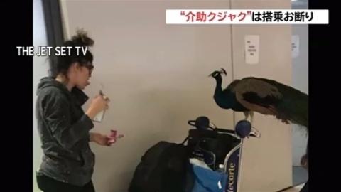 """""""介助クジャク""""の搭乗断られる、米の空港(TBS系(JNN)) - Yahoo!ニュース"""