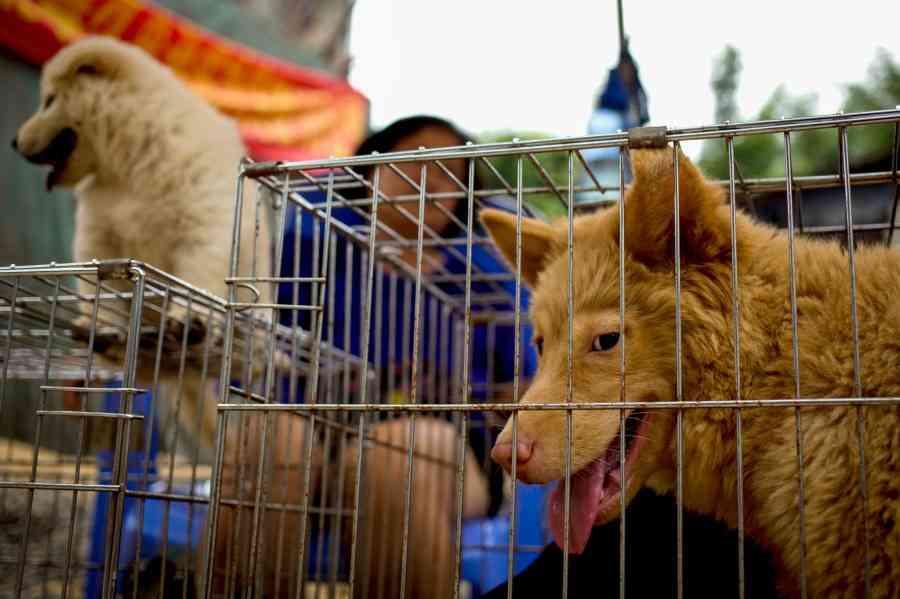 台湾、犬肉や猫肉の消費に罰金、アジア初 | ナショナルジオグラフィック日本版サイト