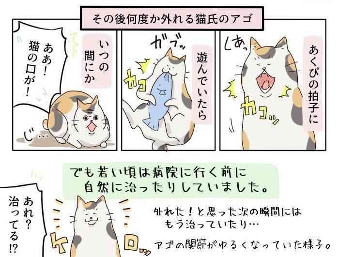 飼い猫のアゴが外れた!焦らず対応するためのマンガに大反響