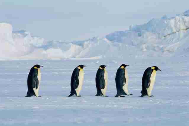 南極観測隊が着る防寒具の総額 マツコが驚き「安いよね」 - ライブドアニュース