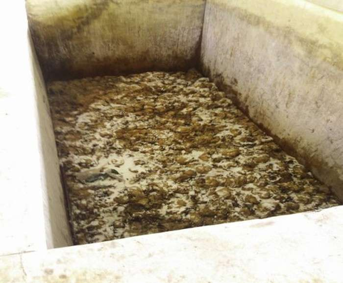 平昌五輪のノロウィルス騒動 汚染された地下水で食事を作ったのが原因と判明 大便物質による大腸菌などが検出される