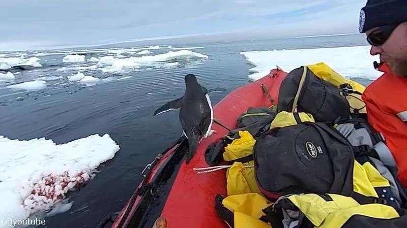 ペンギン「間違えました」…うっかり南極調査船に乗り込む(動画)