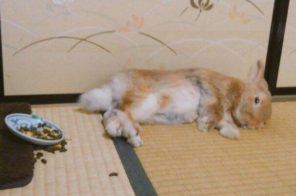「飼い主の心臓に悪いペットの寝相コンテスト」 13匹の優勝候補