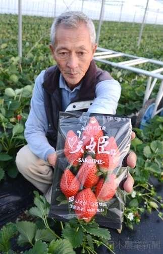 TOKIOが品種改良する姿を見て一念発起 イチゴの新品種作り上げる - ライブドアニュース